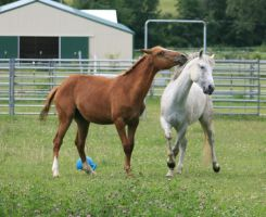 Horse Interaction 18 .:Stock:. by Photopolis