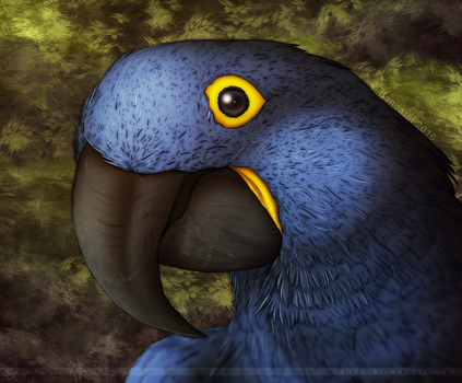 The Hyacinth Macaw Project by Bandarai
