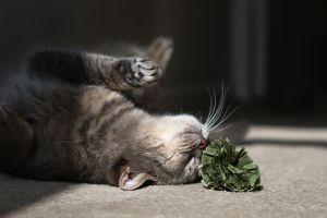 Misty Loves Catnip by FurLined
