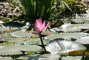 view to waterlily 4 by ingeline-art