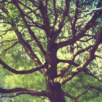 Tree by Andaro