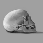 Skull Study 1 by AlanTheRobot
