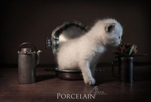 Porcelain by MD-Arts
