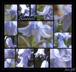 Bluebell Montage by icclefairy