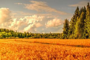 The days of late summer by Floreina-Photography