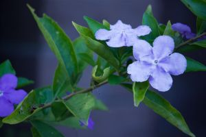 flora_0980 by craigp-photography
