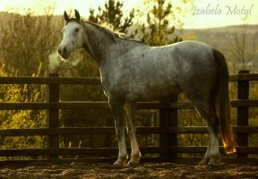 horse #45 by imtl