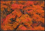 Orange leaves. 800-2313, with story by harrietsfriend