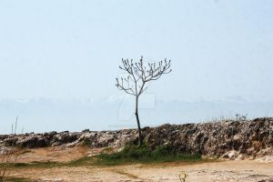 Lone Tree. by xxx-kitty-xxx