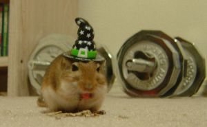 Halloween Witch Hat Gerbil by WinterHaven