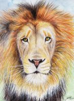 Lion by Andrew-Willson