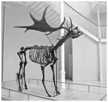 Irish Elk by Purplejackdaw