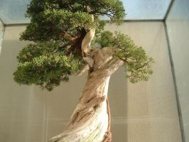 Bonsai 032 by aurochstock