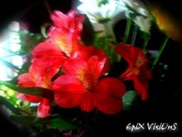 Pink Little Flowers by EpiXVisiOnZ