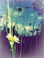 flower by nudgee