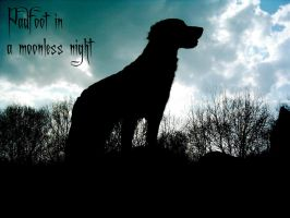 Padfoot in a moonless night by Ailime-Ael