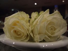 white roses by Nicky1989