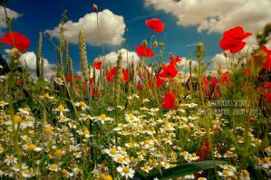 my poppyworld by landscapesaxony