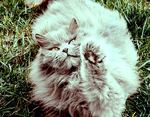 say hello cat by eddieabscission