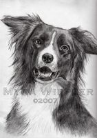 A3 part one - Border Collie by Ylgur