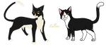 All Warrior Cats Challenge #3 Tallstar by MediocrePotato