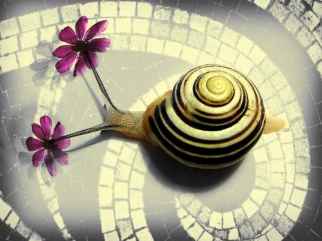flowering snail - Tlon by Kerbi