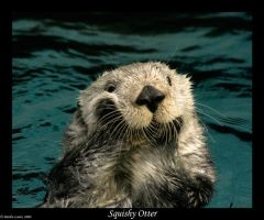 Sea Otter: Squishy Face by Animal-Lovers-Unite