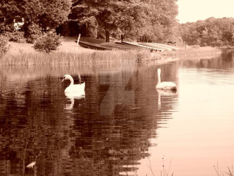 Swans Sepia by ElvishPrincess