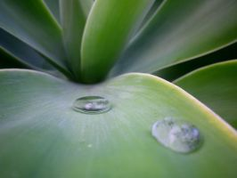 water droplets. by mangagal1