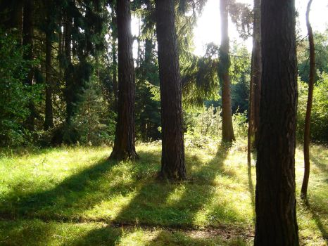 forest 3 by sacral-stock