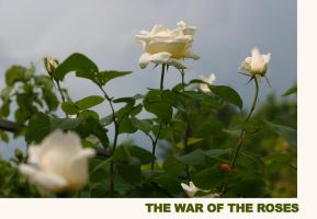 The War of the Roses by Petko