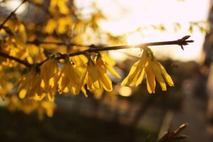 Yellow morning by Bastet-mrr