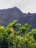 Hawaiian Koolau Mountains by joeyartist