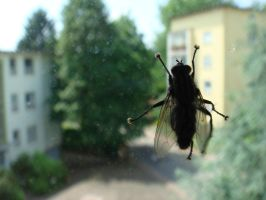 A Fly :D by Leif-Oo