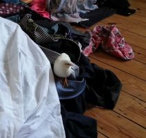 Conquering the Clothes Mountain by CuriousCreatures
