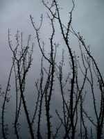 Bare Tree Branches by Rubyfire14-Stock