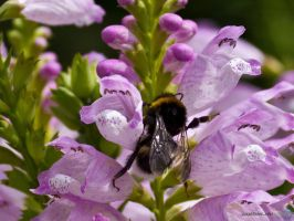 Plant + Bumble Bee by Puttee
