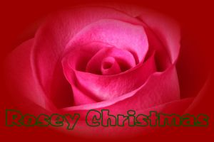 Rosey Christmas by digitalpix4all