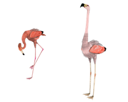 looking yonder flamingos 3d by madetobeunique