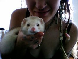 The Best Ferret Ever by ArcaneAffliction