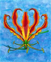 Flame Lily - Print by Anna-Atomic