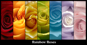 rainbow roses by cryptic-sacrifice
