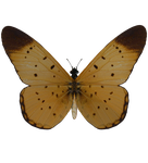 E-S Butterfly by Elevit-Stock
