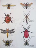Beautiful bugs by Cocoloy
