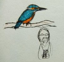Kingfisher by tommy-tommerson