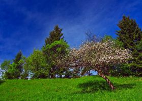 Spring Colors. by lica20