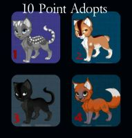 Point Adopt Collage #1 by Niyra