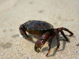 Crabby by Tuftless