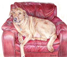 Dog in Chair by whiterabbitart