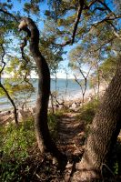 Sea Island Pine Forest by Bawwomick